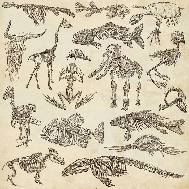 Bones and skulls of different animals - freehands vector illustration