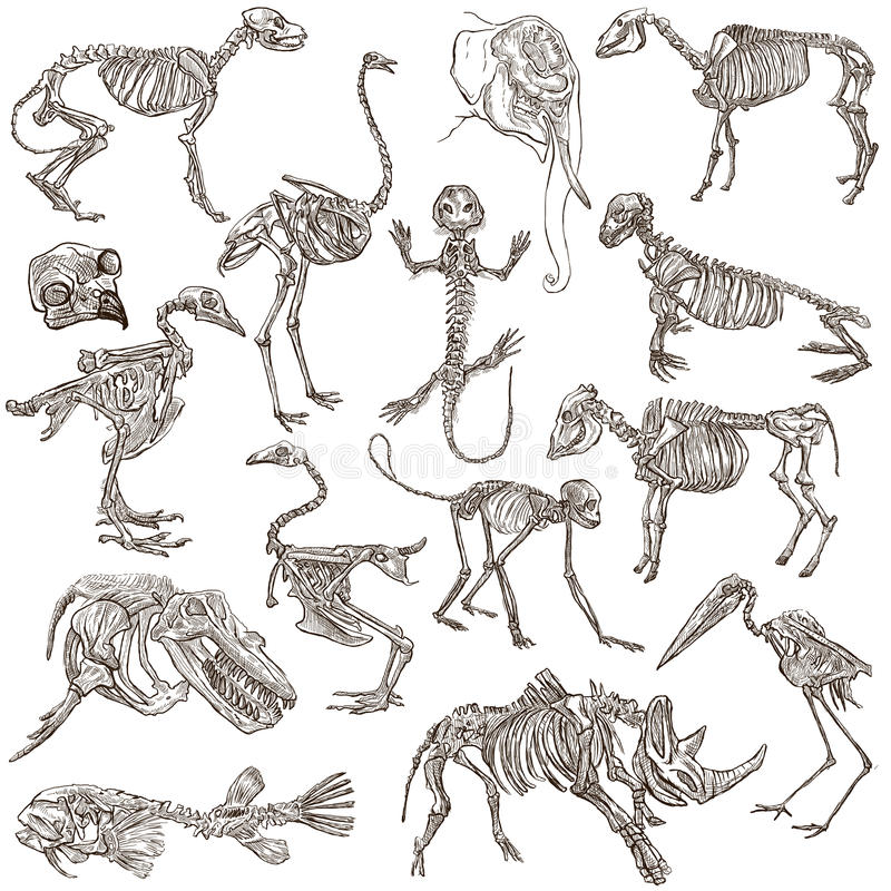 Bones and skulls of different animals - freehands royalty free illustration