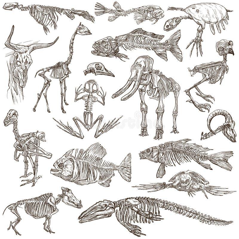 Bones and skulls of different animals - freehands stock illustration