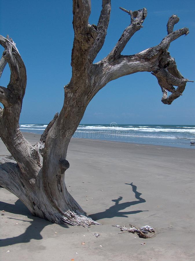 Free Boneyard Beach Royalty Free Stock Image - 100918756