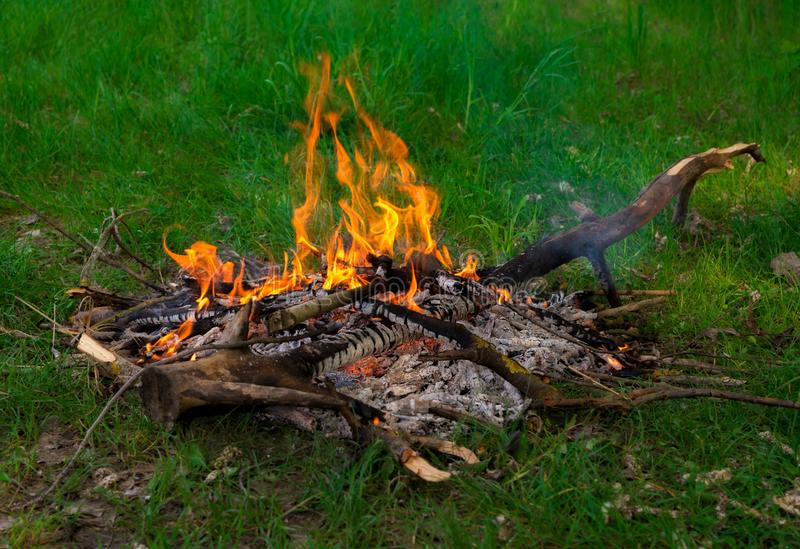 Bonfire of dry twigs on the green grass. Summer holiday in nature. The concept of forest fires.  royalty free stock images