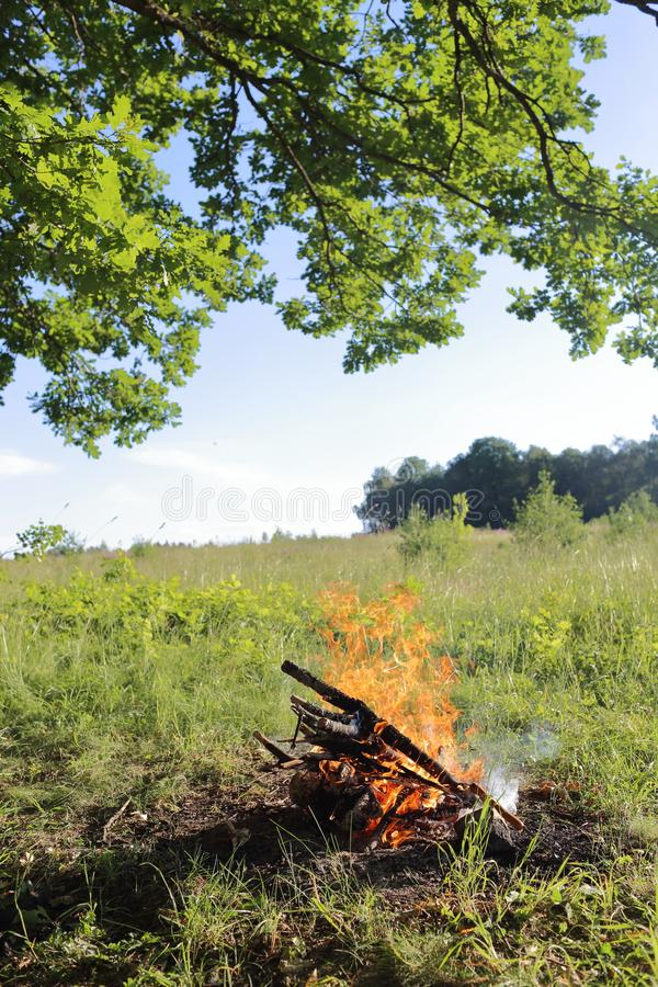 A bonfire on the nature. A bonfire in a field under a tree. A summer day in the field. Russia, Moscow region stock photos