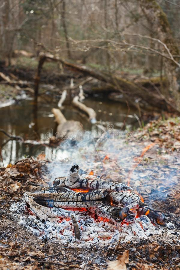 Bonfire by the water in the forest stock photo