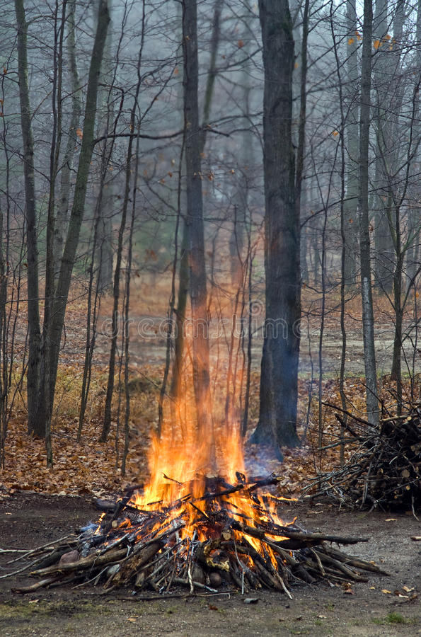 Bonfire in the Woods royalty free stock image