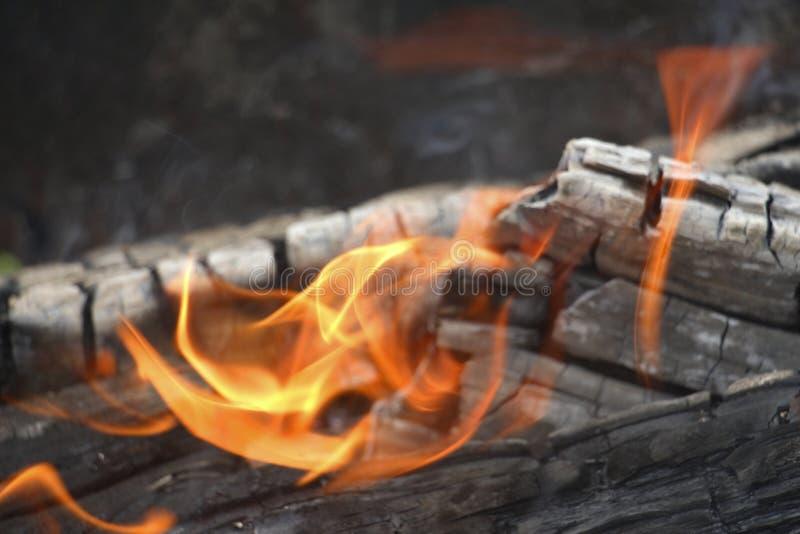 bongos Πορτοκαλιά φλόγα μιας πυρκαγιάς Καίγοντας δέντρο σημύδων στην εστία στοκ εικόνα με δικαίωμα ελεύθερης χρήσης