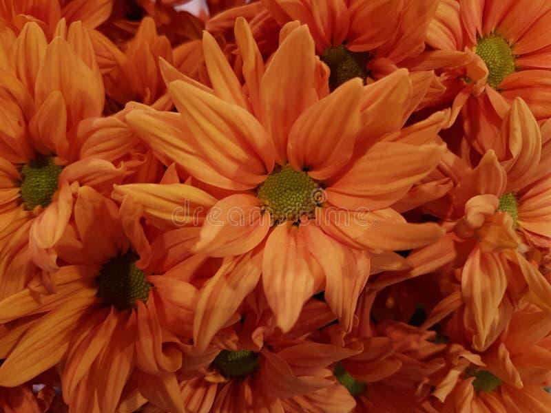 Bonheur orange photo stock