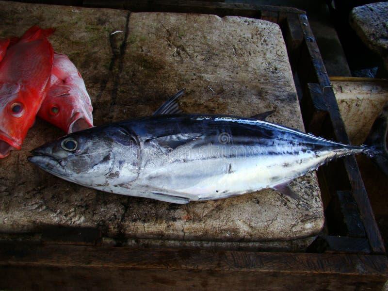 Bonietentonijn door artisanale Filipijnse vissers fresly wordt gevangen die stock fotografie