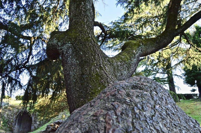 Bonita vista de las ramas de la grandeza imagen de archivo