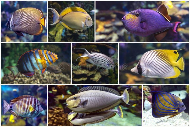 Bonito coral tropical, corales - conjunto - collage foto de archivo