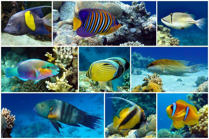 Bonito coral tropical, corales - conjunto - collage fotos de archivo libres de regalías