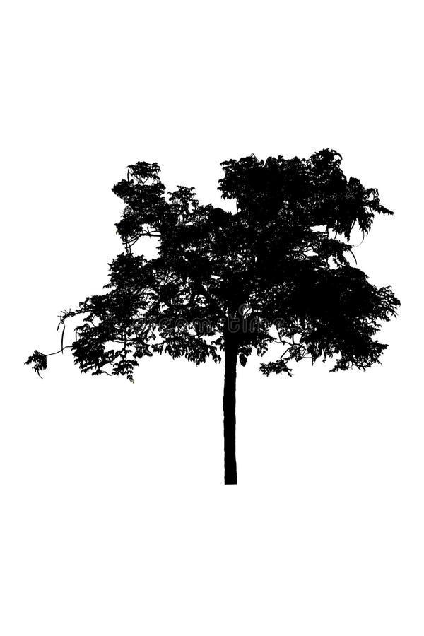 Bonito das silhuetas da árvore isolado no fundo branco imagem de stock royalty free