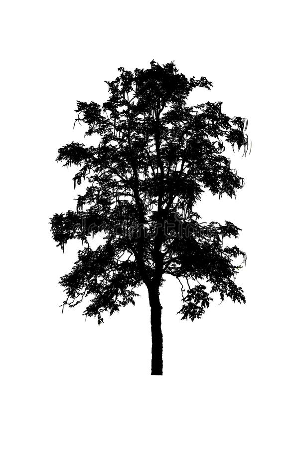 Bonito das silhuetas da ?rvore isolado no fundo branco fotografia de stock