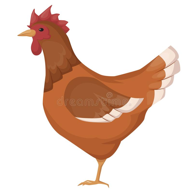 Bonito, engraçado, animal de estimação, galinha do pássaro, com as penas coloridas, chocando e trazendo ovos ilustração stock