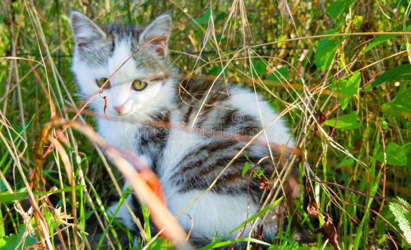 Bonito gatito de hierba imagen de archivo libre de regalías