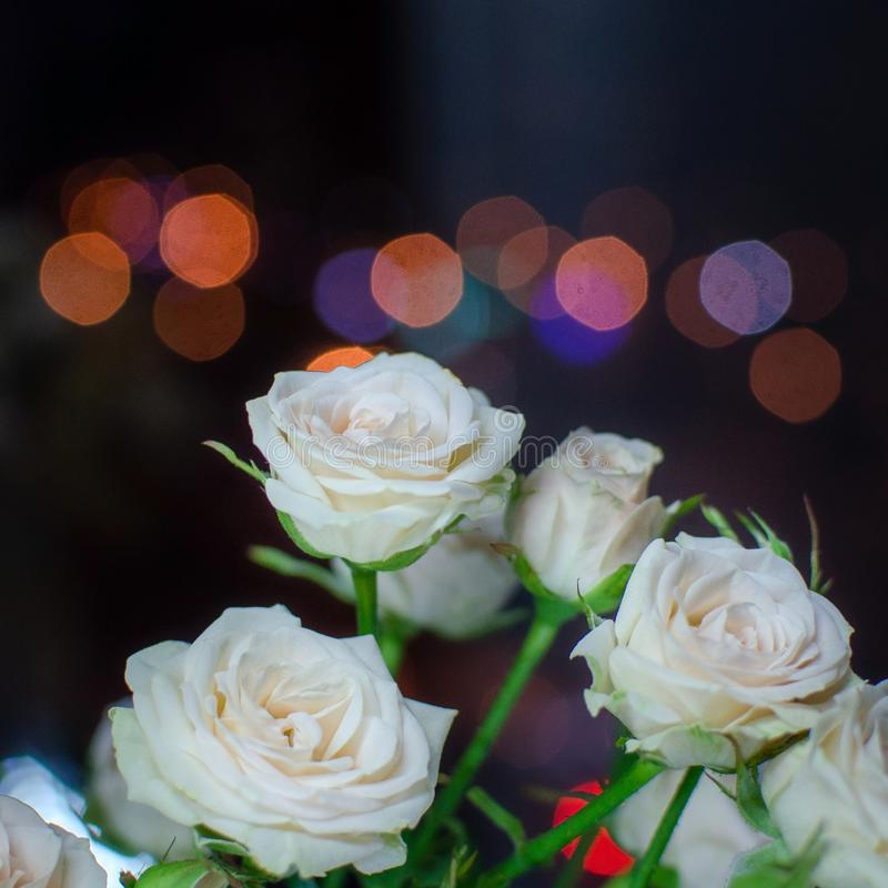 Bonito ramo en un fondo oscuro Composición elegante de rosas fotos de archivo libres de regalías