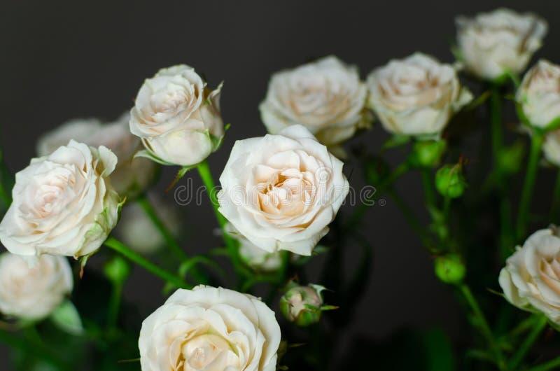 Bonito ramo en un fondo oscuro Composición elegante de rosas imagenes de archivo