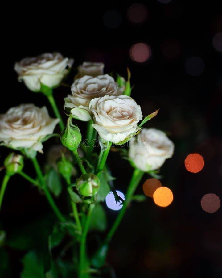Bonito ramo en un fondo oscuro Composición elegante de rosas imagen de archivo libre de regalías