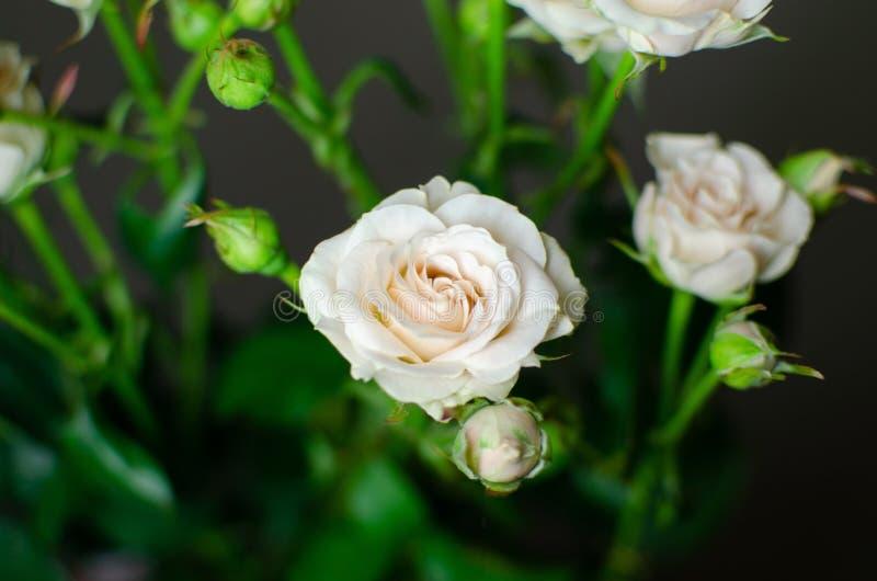 Bonito ramo en un fondo oscuro Composición elegante de rosas imágenes de archivo libres de regalías