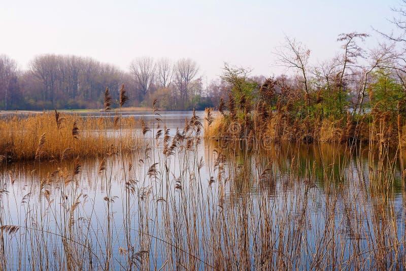 Bonito relaxou primeiramente o Mola-dia pelo lago em um parque em Amsterdão fotografia de stock royalty free
