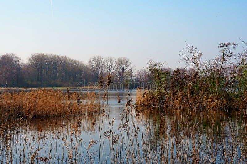 Bonito relaxou primeiramente o Mola-dia pelo lago em um parque em Amsterdão foto de stock