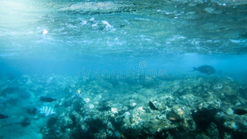 Bonito sob a foto da água da escola coral colorida grande dos peixes que nada no Mar Vermelho imagens de stock royalty free