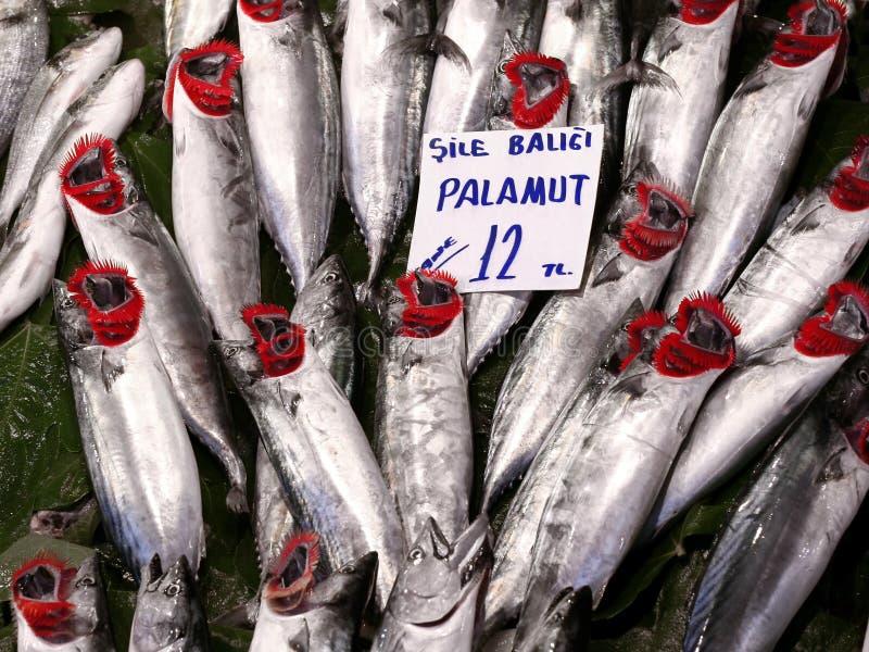 Bonitos at fish market royalty free stock photography
