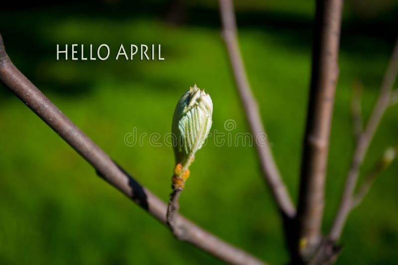 Bonjour avril, message avec la belle scène de nature image stock