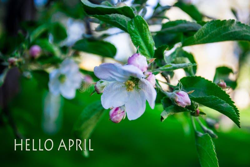 Bonjour avril, message avec la belle scène de nature photo libre de droits