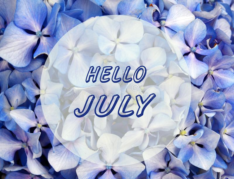 Bonjour carte de accueil de juillet avec le lettrage écrit par main fond sur fleurs bleues naturelles d'hortensia ou de Hortensia images stock