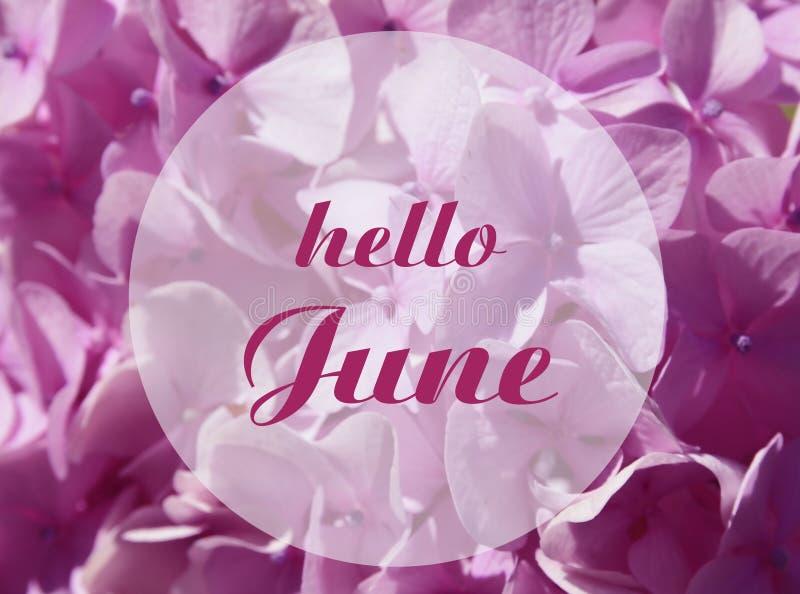 Bonjour carte de accueil de juin avec le lettrage écrit par main fond sur fleurs roses naturelles d'hortensia ou de Hortensia photo stock