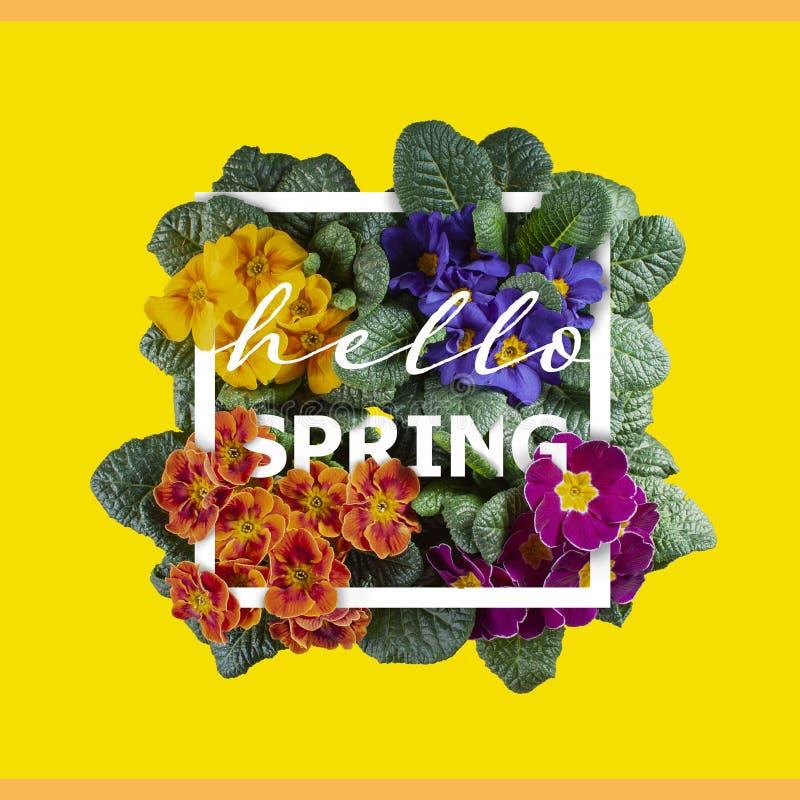 Bonjour carte de voeux de ressort Primevères colorées lumineuses, vue supérieure, typographie de fleur photographie stock