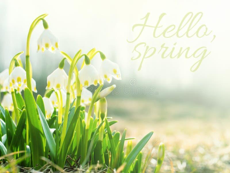Bonjour concept de ressort Perce-neige, premières fleurs de ressort dans le pré, symbole de nature se réveillant au soleil Tonali photographie stock