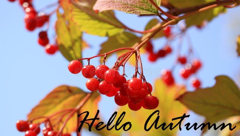Bonjour feuilles de fond ou de carte d'automne photo stock