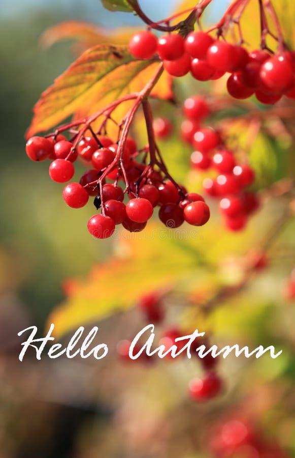 Bonjour feuilles de fond ou de carte d'automne photo libre de droits