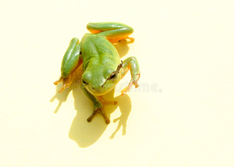 Bonjour grenouille images stock