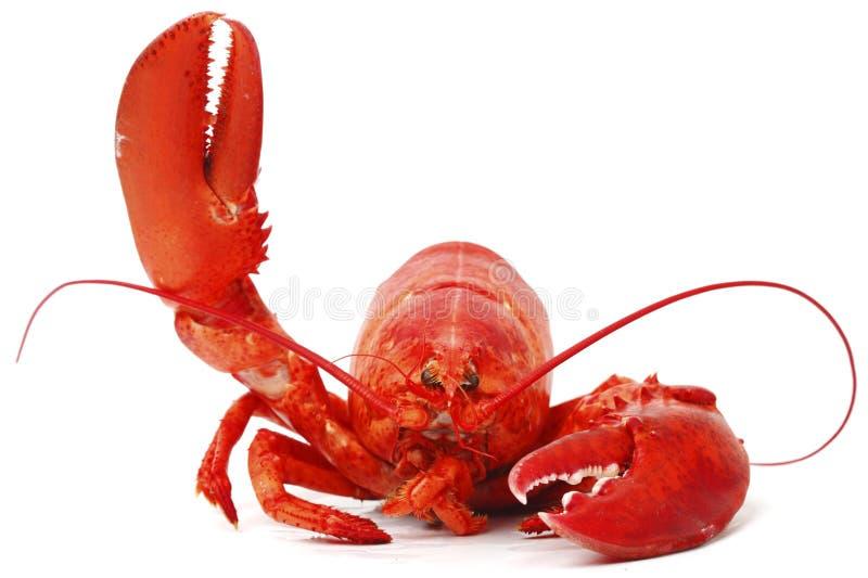 Bonjour homard photos stock