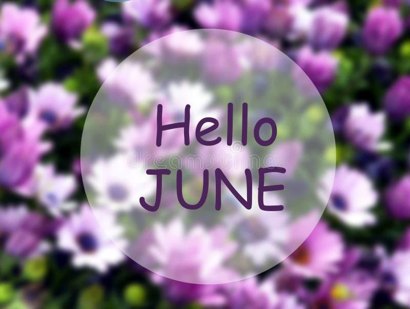 Bonjour juin Faire bon accueil à la carte avec le texte sur un fond floral naturel pourpre brouillé Concept de saison d'?t? illustration stock