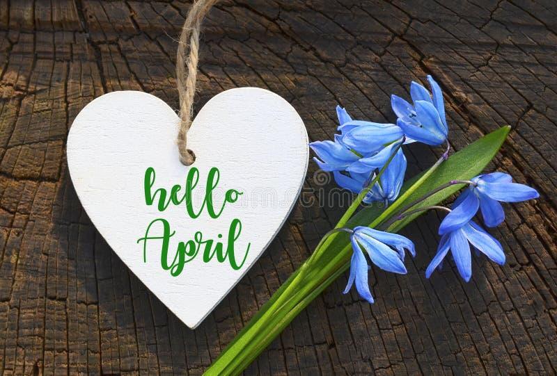 Bonjour la carte de voeux d'avril avec le bleu jaillissent d'abord des fleurs Coeur blanc décoratif et perce-neige bleus photo stock