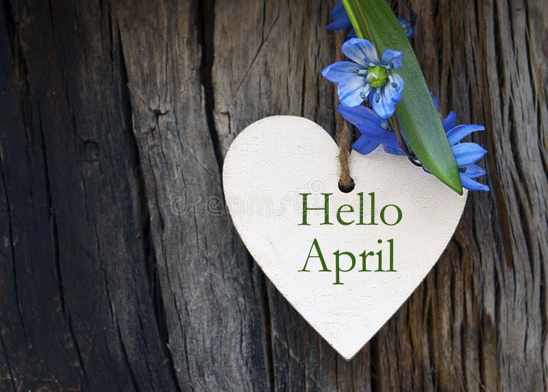 Bonjour la carte de voeux d'avril avec le bleu jaillissent d'abord des fleurs sur le fond en bois images libres de droits