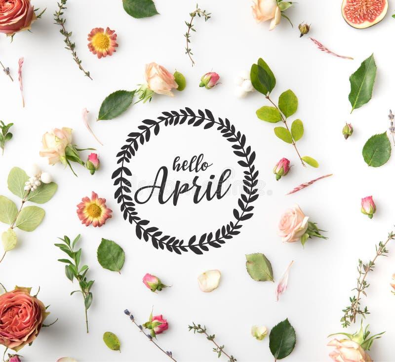 BONJOUR lettrage d'AVRIL entouré avec les fleurs, les pétales roses et les figues d'isolement sur le blanc image libre de droits