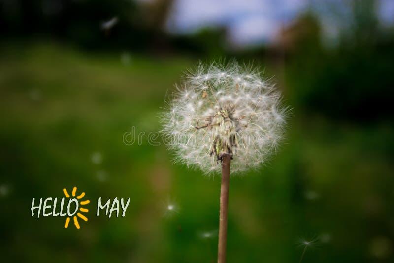 Bonjour mai, texte avec la belle scène de nature photo libre de droits