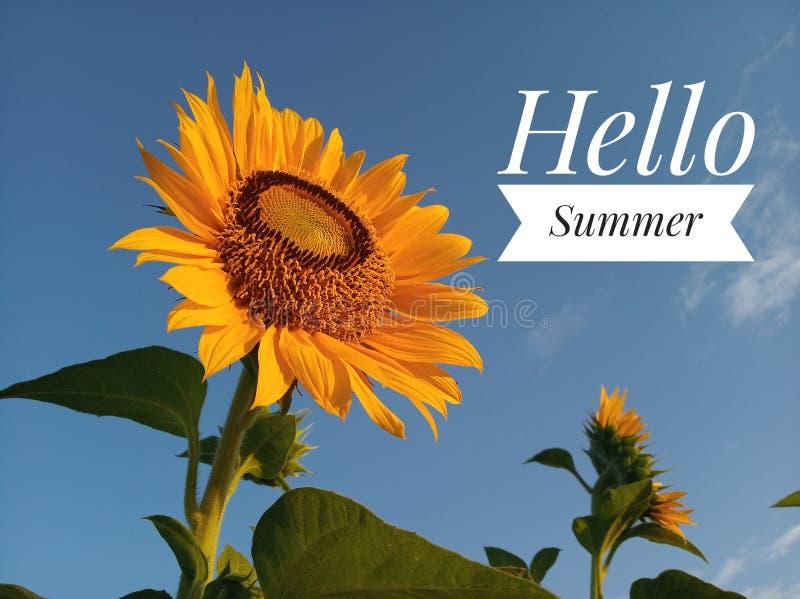 Bonjour salutations d'été et plan rapproché de floraison de tournesol image libre de droits