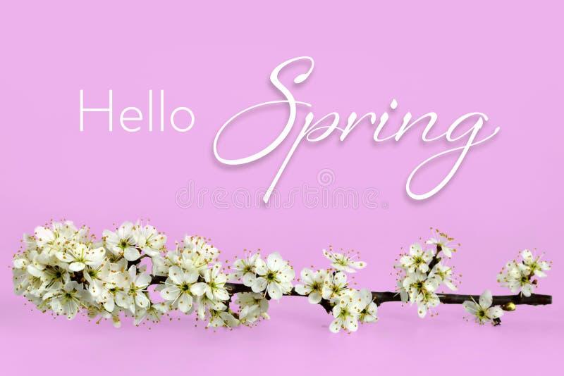 Bonjour texte de ressort et fleurs de ressort photographie stock libre de droits