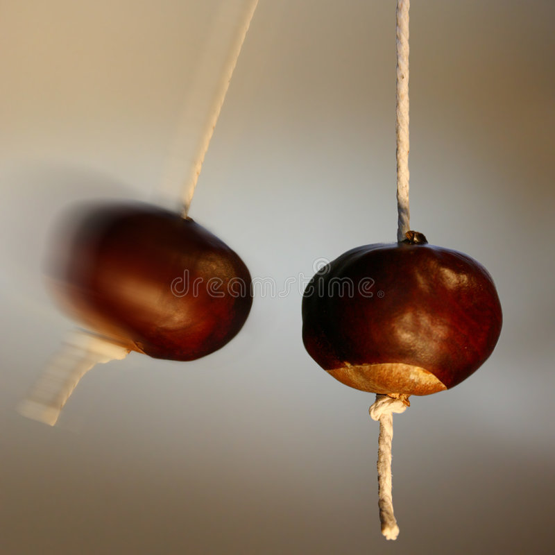 Free Bonkers Conkers Royalty Free Stock Images - 604539