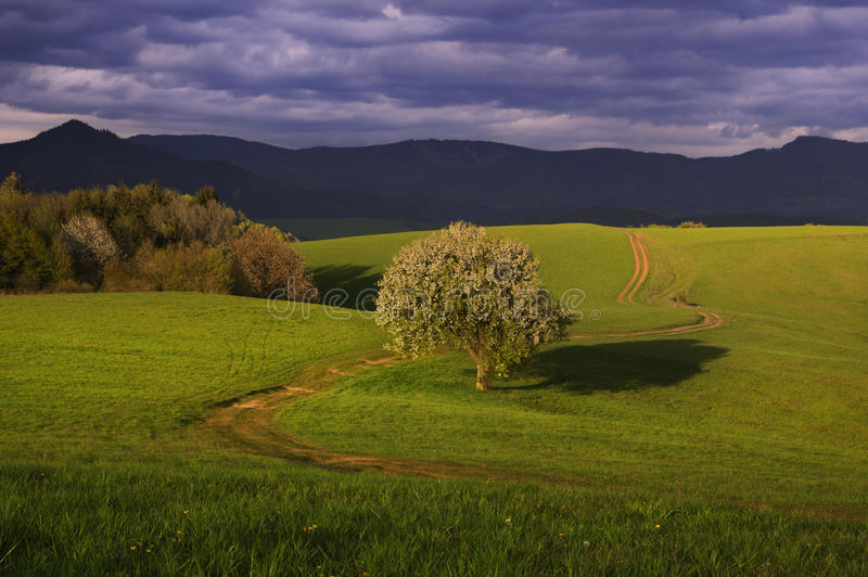 Bonkret łąki i drzewo zdjęcia stock