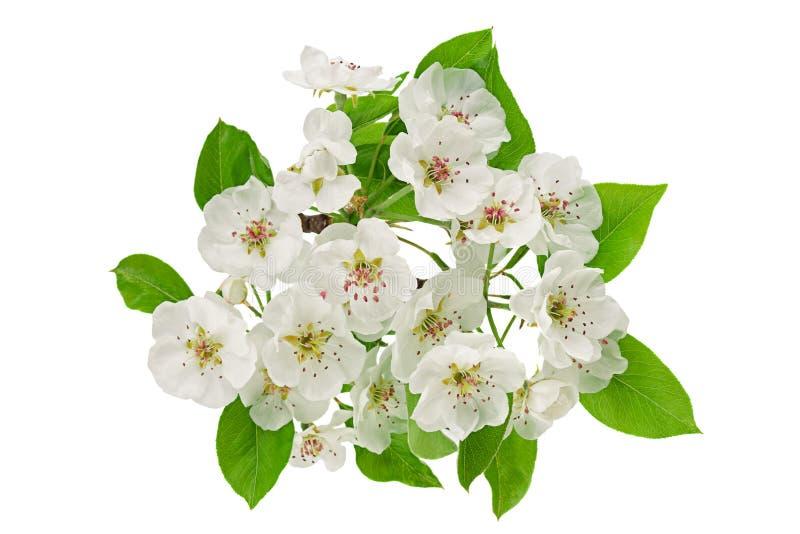 Bonkreta kwiatu gałąź zbliżenie na bielu obraz stock