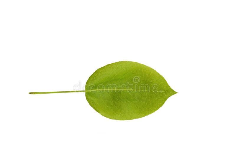 Bonkreta liść odizolowywający obrazy stock