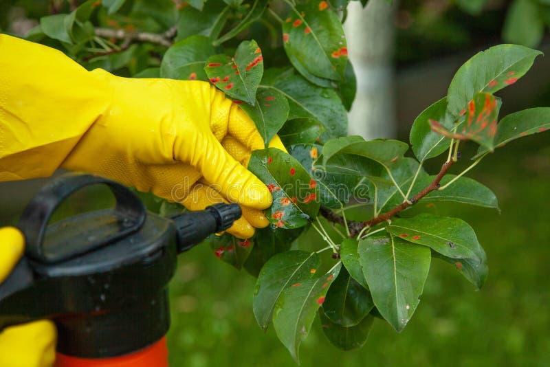 Bonkreta liście w czerwonej kropce Ogrodniczka kropi zdjęcie royalty free