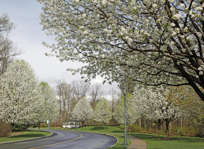 Bonkreta Treen W kwiacie fotografia royalty free