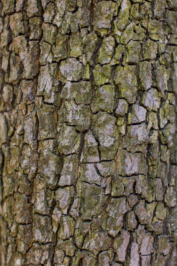 Bonkrety drzewna barkentyna obraz royalty free